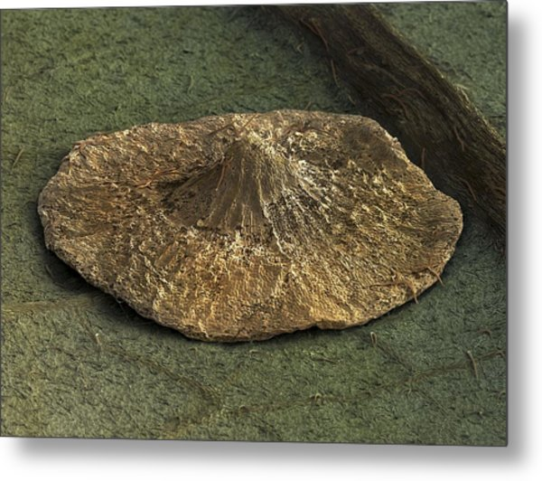 Oak Pancake Spangle Gall, Sem Metal Print by Power And Syred