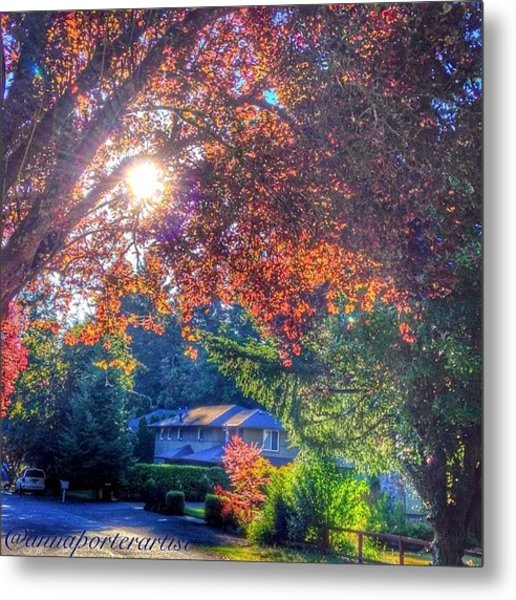 Oak Street Early Evening Light Metal Print
