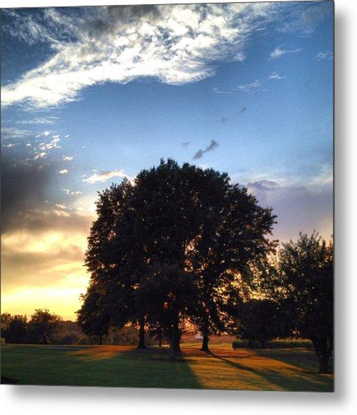 Oak Tree At The Magic Hour Metal Print