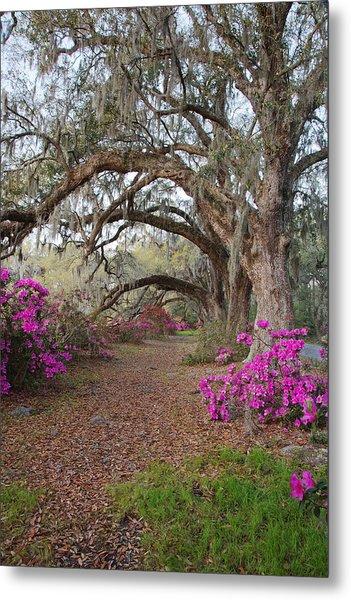 Oak Trees And Azaleas Metal Print