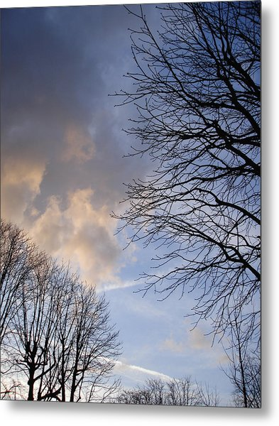 Oak Trees Composition Metal Print by Michel Mata