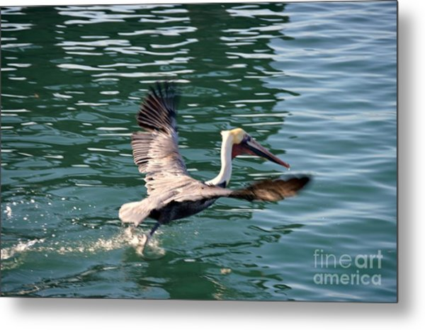 Metal Print featuring the photograph Oceanside  by Laurie Lundquist