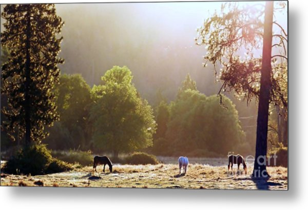 October Graze Metal Print