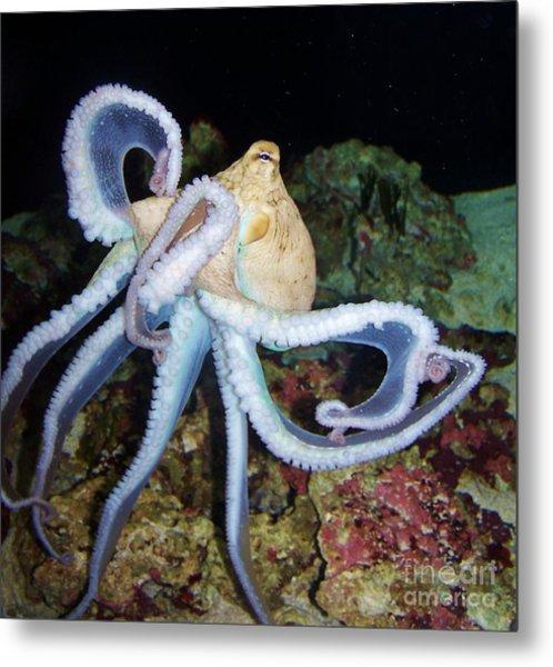 Octopus Waikiki Metal Print