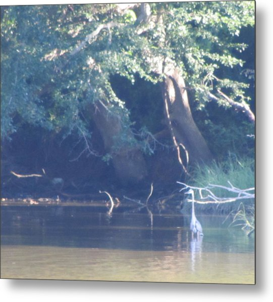 Ode The Great Blue Heron Metal Print by Debbie Nester