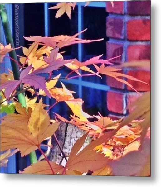 Of Maples And Bricks Metal Print
