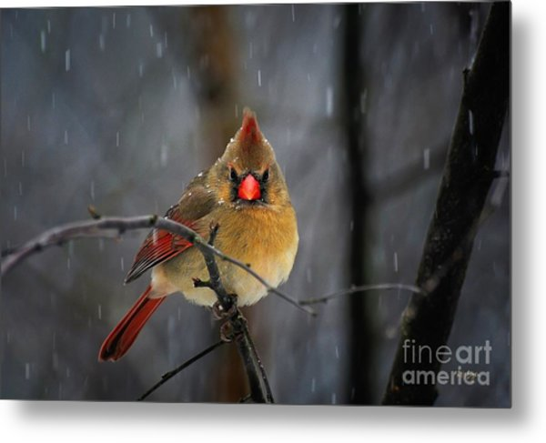 Metal Print featuring the photograph Oh No Not Again by Lois Bryan