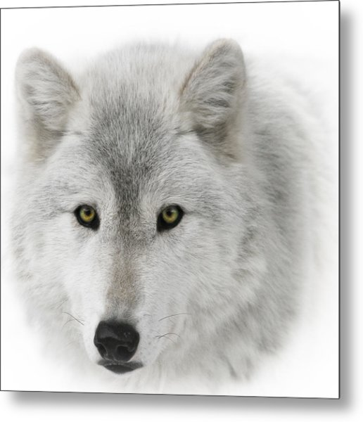 Oh Those Eyes Metal Print
