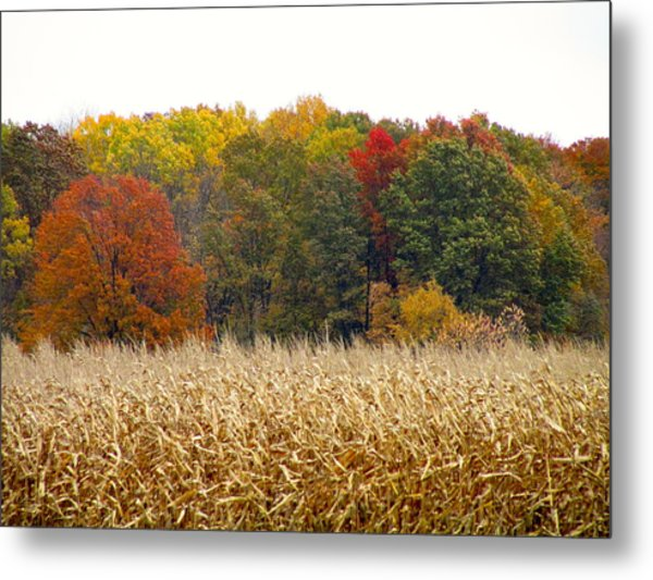 Ohio In November Metal Print by Andrea Dale