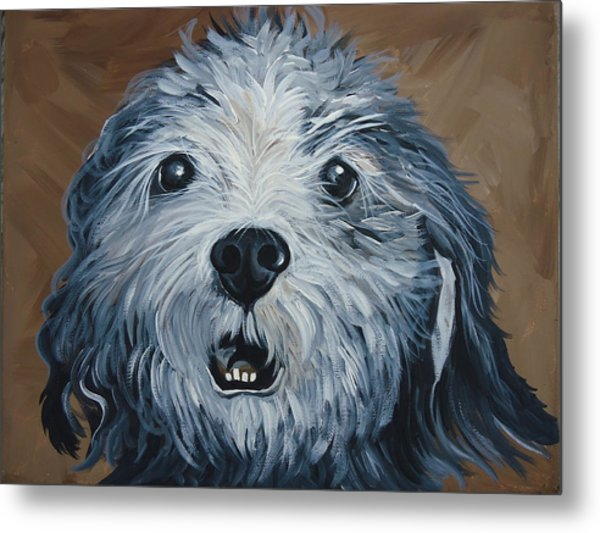 Old Dogs Are The Best Dogs Metal Print