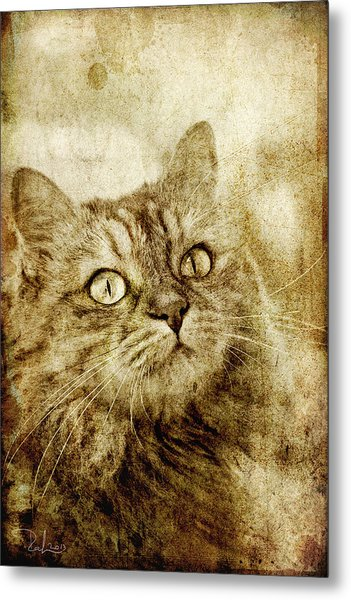 Old Fashion Cat Metal Print