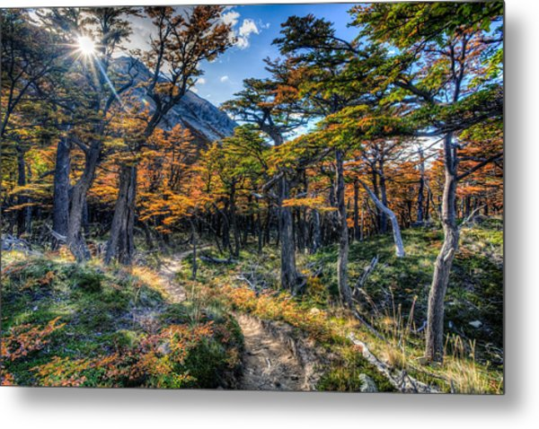 Old Forest Metal Print by Roman St