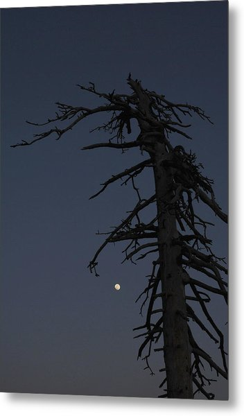 Old Man And Moon Metal Print