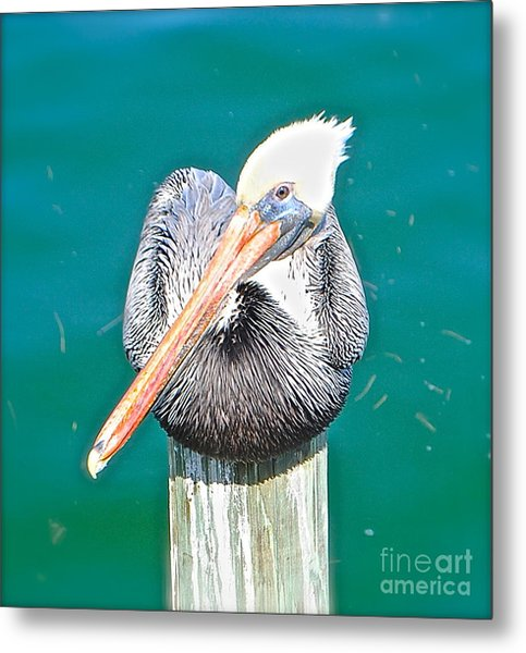 Old Man Pelican On Anna Maria Pier Metal Print