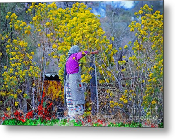 Old Mexican Woman Gathering Flowers Metal Print