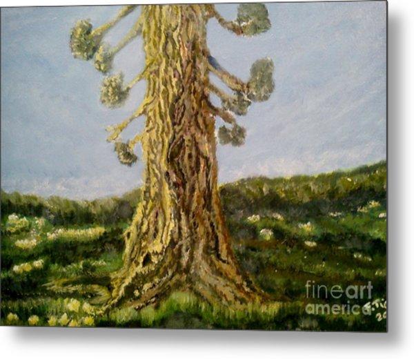 Old Tree In Spring Light Metal Print