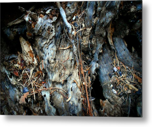 Old Tree Number 2 Metal Print