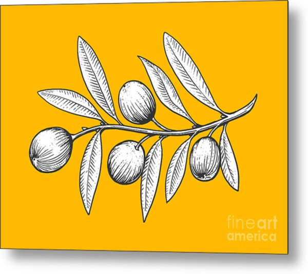 Olive Branch Engraving Style Vector Metal Print by Alexander p