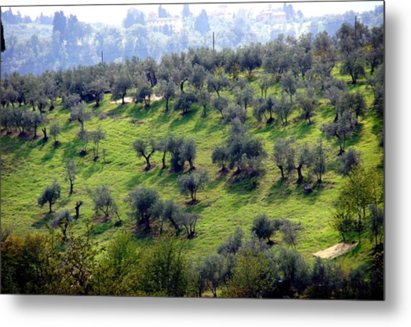 Olive Trees And Shadows Metal Print