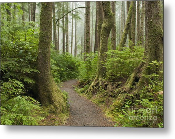 Olympic Park Trail Metal Print