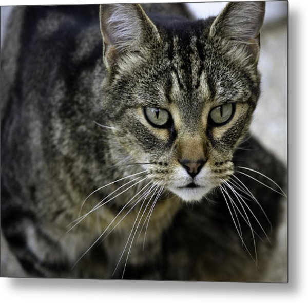 On The Hunt Metal Print