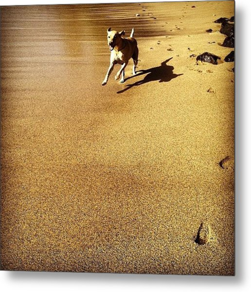 On The Loose Metal Print