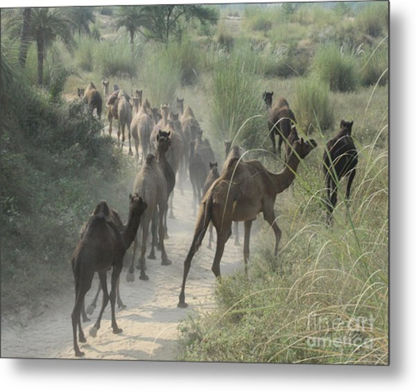 On The Road To Pushkar Metal Print