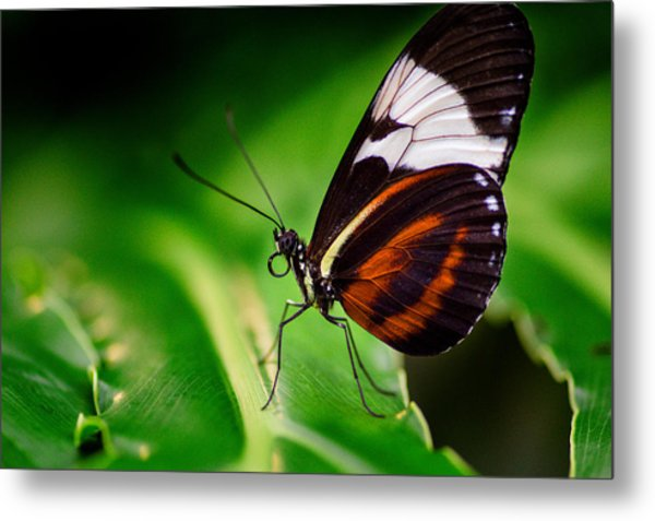 On The Wings Of Beauty Metal Print