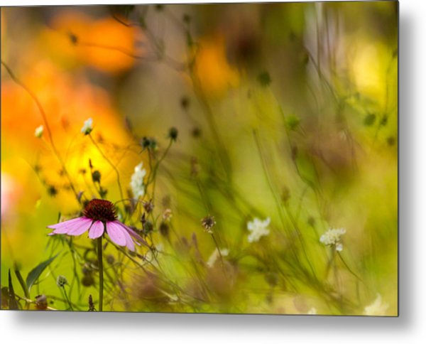 Once Upon A Time There Lived A Flower Metal Print