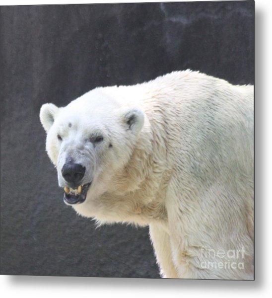 One Angry Polar Bear Metal Print