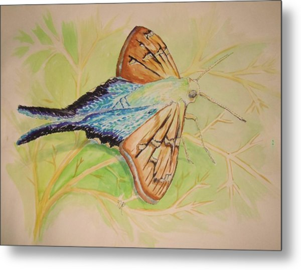 One Day In A Long-tailed Skipper Moth's Life Metal Print