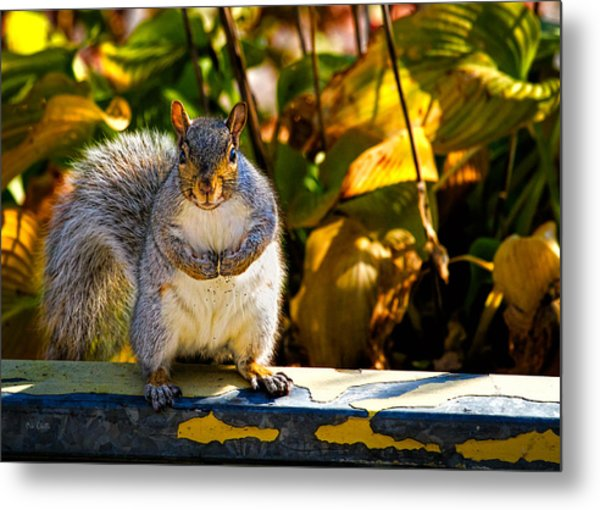 One Gray Squirrel Metal Print
