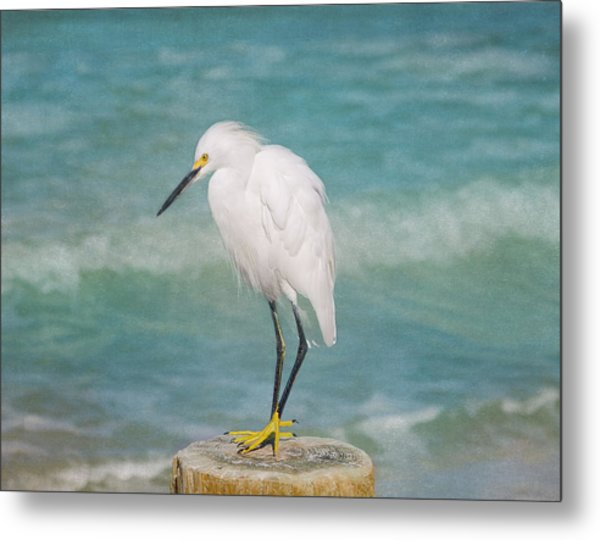 Metal Print featuring the photograph One With Nature - Snowy Egret by Kim Hojnacki