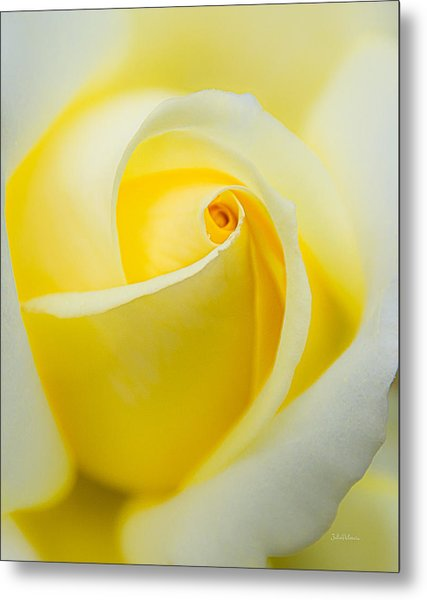 One Yellow Rose Metal Print
