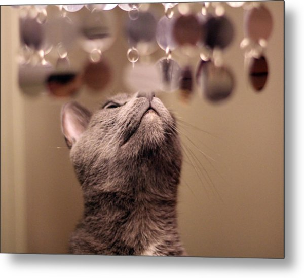 oo Shiny Metal Print by Debbie Cundy