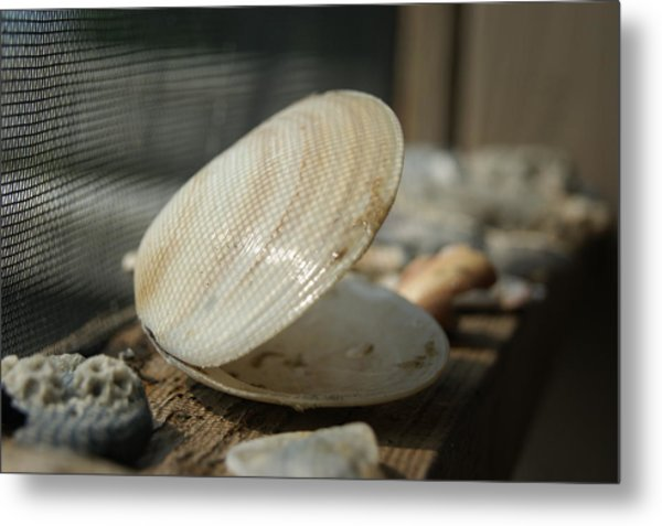 Open Seashell Metal Print by Anne Williamson
