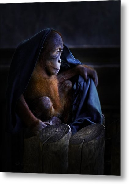 Orang Utan Youngster With Blanket Metal Print