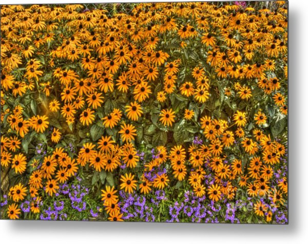 Orange And Purple Daises Metal Print
