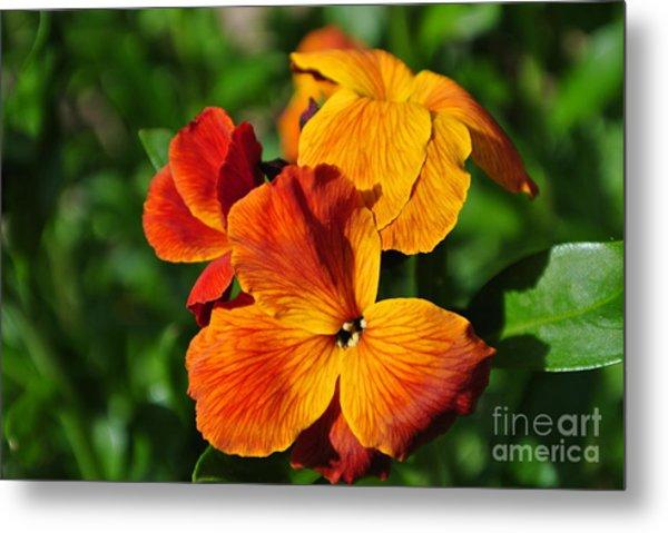 Orange Beauty Metal Print