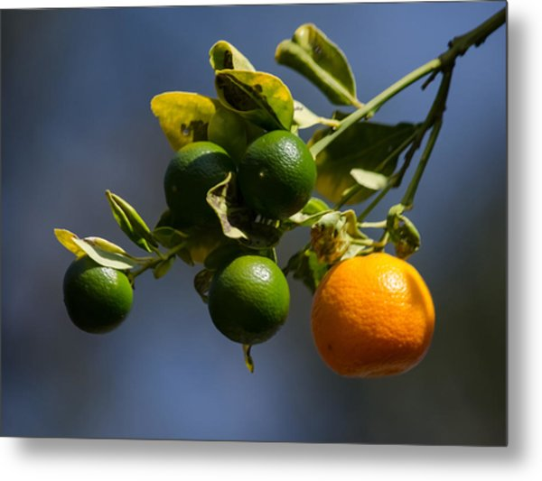 Orange Branch Metal Print