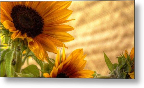 Orange Burst - Sunflower - Mike Hope Metal Print