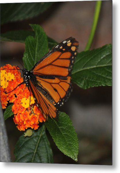 Orange Butterfly On Flowers Metal Print