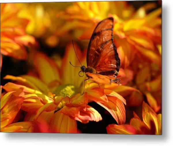 Orange Butterfly On Yellow Flowers Metal Print
