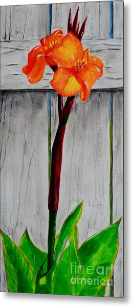 Orange Canna Lily Metal Print