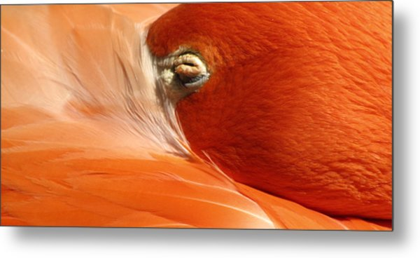 Flamingo Orange Eye Metal Print