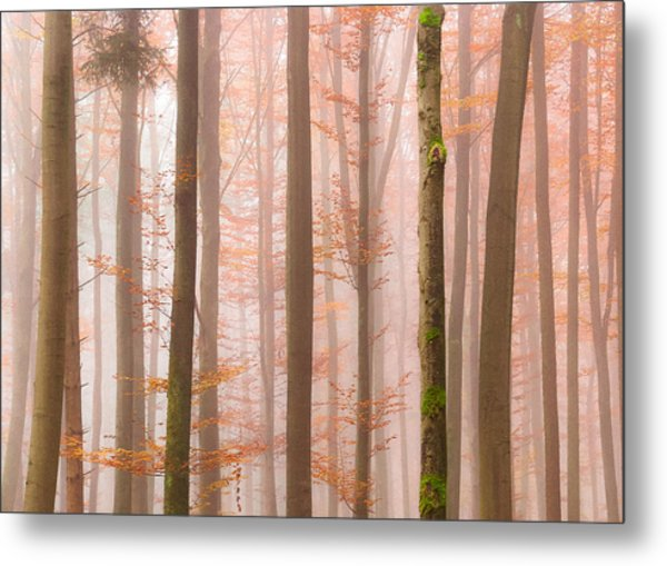 Orange Fog Metal Print