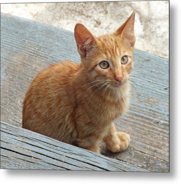 Orange Kitten 2 At The Front Porch Metal Print