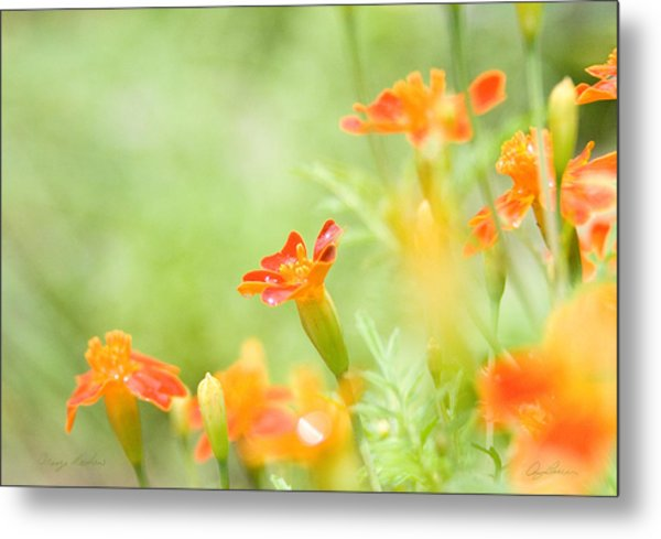Orange Meadow Metal Print