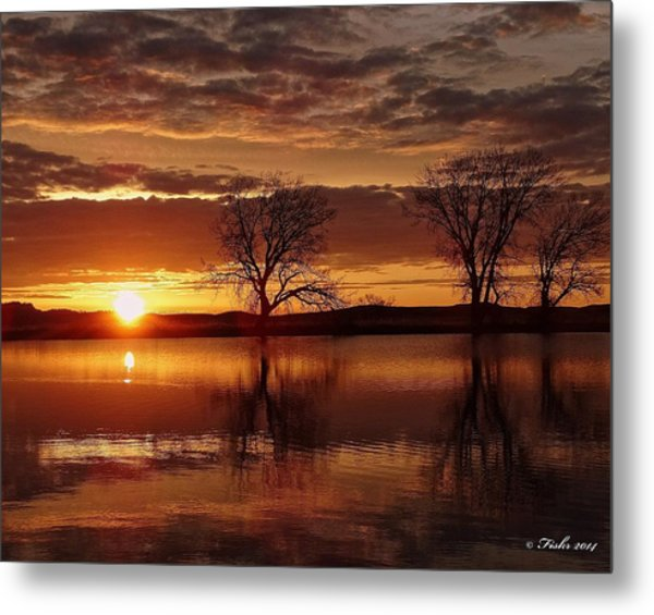 Orange Morning Metal Print
