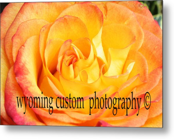 Orange Rose Metal Print